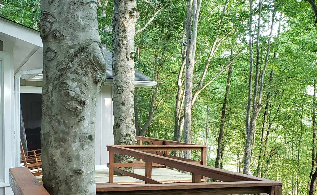 Deck Railing and Tree