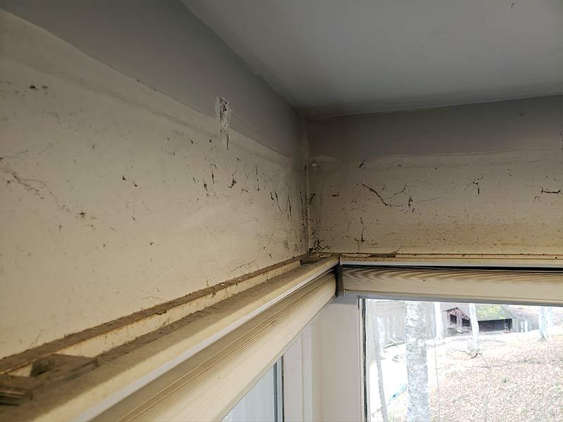 Clean Up around windows wall repair