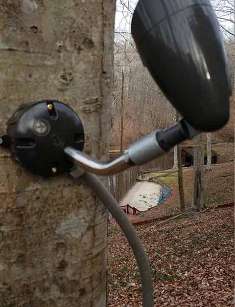 Spot Light mounted on Tree Landscape lighting
